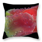 Peachy Throw Pillow by Tracy Hall