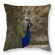 Peacock Close-up Throw Pillow