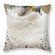 Peregrine Throw Pillow