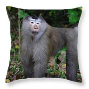 Pig-tailed Macaque Throw Pillow