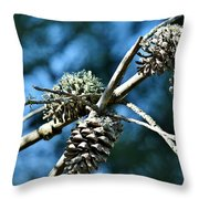 Pine Cones On Dry Branch Throw Pillow