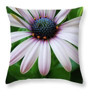 Pink African Daisy Throw Pillow