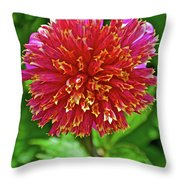 Pink And Yellow Dahlia In Golden Gate Park In San Francisco, California  Throw Pillow