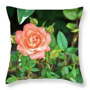 Pink Rose In The Garden Throw Pillow