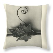 Plant Studies, 1928, Nature Series, By Karl Blossfeldt  Throw Pillow