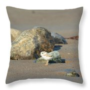 Plover Chick Throw Pillow