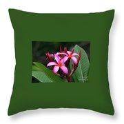 Plumeria Flowers 4 Throw Pillow