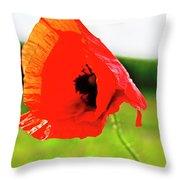 Poppy The Beauty Throw Pillow