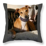 Portrait Of An Italian Greyhound Throw Pillow