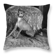 Portrait Of An Italian Greyhound In Black And White Throw Pillow