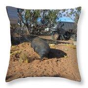 Pot-bellied Pig Throw Pillow