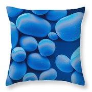 Potato Starch Granules Sem Throw Pillow