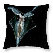 Pteropod Throw Pillow