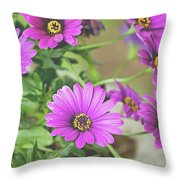 Purple Aster Flowers Throw Pillow