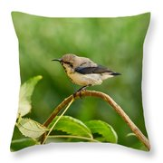 Purple Sunbird Throw Pillow