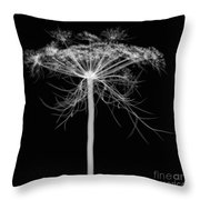 Queen Annes Lace, X-ray Throw Pillow
