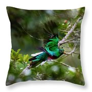 Quetzal In Costa Rica Throw Pillow