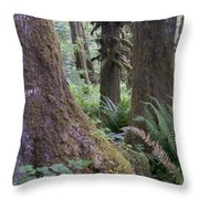 Quinault Rain Forest 3152 Throw Pillow