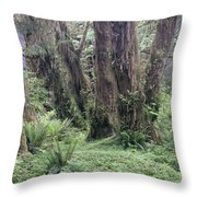 Quinault Rain Forest 3156 Throw Pillow