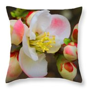 Quince Toyo-nishiki Throw Pillow