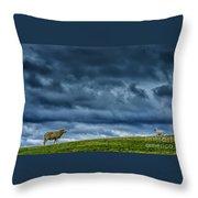 Rain Storm Ewe And Lamb Throw Pillow