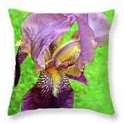 Raindrops On Purple And Yellow Iris Throw Pillow