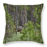 Rare And Wild. Finnish Forest Reindeer Throw Pillow