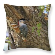 Red Bellied Wood Pecker Throw Pillow