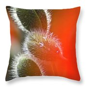 Red Corn Poppy Bud And Red Dots Throw Pillow