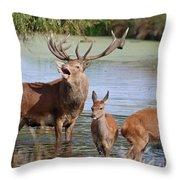 Red Deer In Bushy Park London Throw Pillow