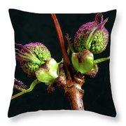 Red Elderberry Flower Buds Throw Pillow