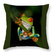 Red-eyed Green Tree Frog Hanging On Throw Pillow