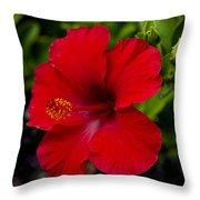 Red Hibiscus - Kauai Throw Pillow
