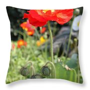 Red Iceland Poppy Throw Pillow