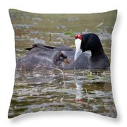 Red Knobbed Coot Throw Pillow
