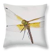 Red-veined Meadowhawk Throw Pillow