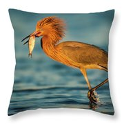 Reddish Egret With Fish Throw Pillow