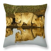 Reflected Lions Throw Pillow