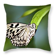 Rice Paper Butterfly 5 Throw Pillow