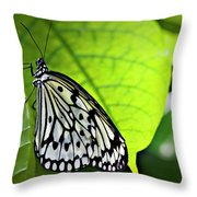Rice Paper Butterfly 6 Throw Pillow