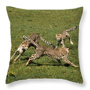 Ring Around The Cheetahs Throw Pillow