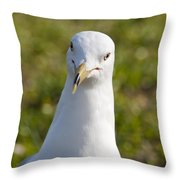 Ring-billed Gull Throw Pillow