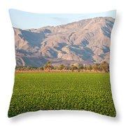Romaine Lettuce Throw Pillow