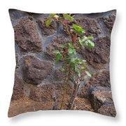 Rose Bush Throw Pillow
