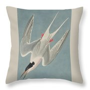 Roseate Tern Throw Pillow