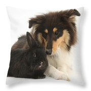 Rough Collie With Black Rabbit Throw Pillow