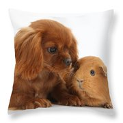 Ruby Cavalier King Charles Spaniel Pup Throw Pillow by Mark Taylor