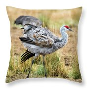 Ruffled Feathers Throw Pillow