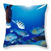 Saipan Marine Life Throw Pillow