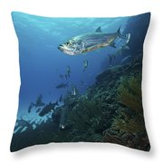 School Of Tarpon, Bonaire, Caribbean Throw Pillow by Terry Moore